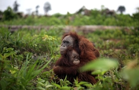 Why biodiversity is declining even as protected areas increase | GarryRogers Biosphere News | Scoop.it