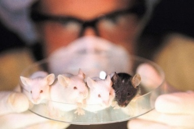 Imperial animal testing report 'should resonate' across sector | K&I Group BIS | Scoop.it