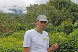 Johny Guichard et sa forêt de thé bio | Le monde rural et touristique | Scoop.it