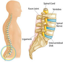 Spine Surgery In India - Safer With Affordable Cost   Best Hospital for Heart Treatment in Chennai   Scoop.it