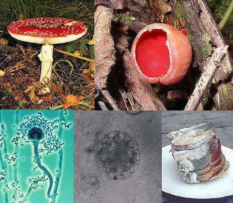 THE COLLECTIVE INTELLIGENCE: Plastic-Eating Fungi Found in the Amazon May Solve World's Waste Problem | Biospheric Cities | Scoop.it