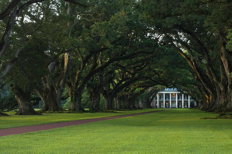 Oak Alley Plantation In The Summer Time by Chris Coffee | Oak Alley Plantation: Things to see! | Scoop.it