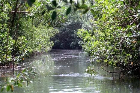 Florestas da Guiné-Bissau estão a ser metidas em contentores | Portugality | Scoop.it