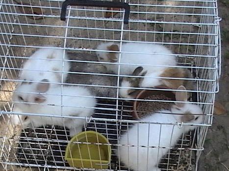 How to Care For Your Angora Rabbit   Garten Startseite   Garten-startseite   Scoop.it