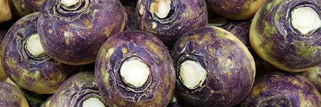 Légumes oubliés : plaidoyer pour le rutabaga   Chuchoteuse d'Alternatives   Scoop.it