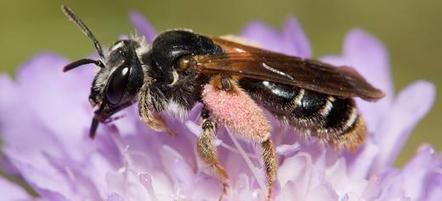 Bee and wild flower biodiversity loss slows - U Leeds (2013) | seafood marketing | Scoop.it