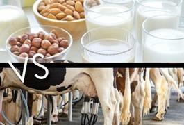 Lait de vache vs lait végétal : entre dangers et bienfaits | E-santé et médicaments en ligne | Scoop.it