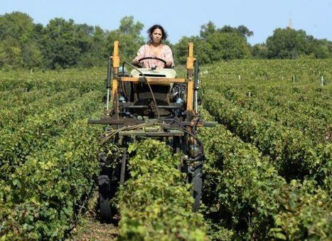 Lyon, le Prix Raisin, lutte anti-fraude, nouveaux outils pour l'oenotourisme… : l'actu du vin en 11 points | ATABULA | Oenotourisme et idées rafraichissantes | Scoop.it
