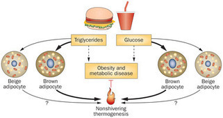 Adipose tissue browning and metabolic health : Nature Reviews Endocrinology : Nature Research | Research Biotechnologies | Scoop.it