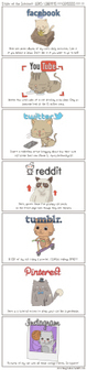 The State of the Internet Explained With Cats   The Funniest Cats In The World!   Scoop.it