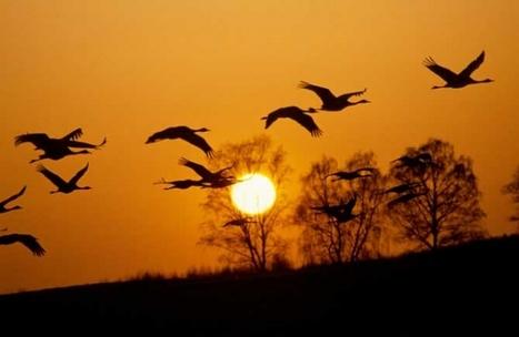 Ornitología: El maravilloso mundo de las aves | Casa NIDO - HOUSE NEST | Scoop.it