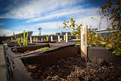 Urban Farming Is Now Flying a Flag at Major U.S. Airports | Vertical Farm - Food Factory | Scoop.it
