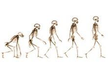 Public's Views on Human Evolution   Human Evolution   Scoop.it