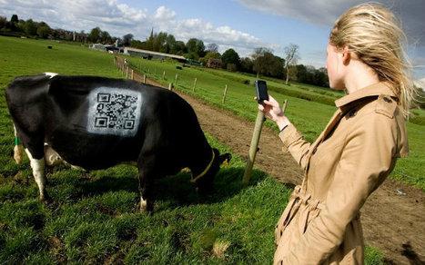Les QRcodes ont eu la peau des vaches | QRdressCode | Scoop.it