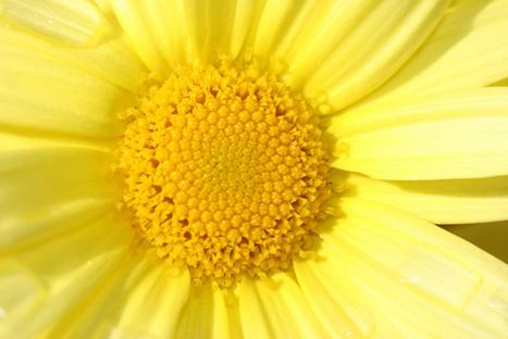 El color amarillo | Amarillo | Scoop.it