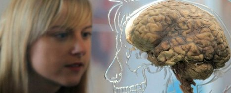 Researchers think they know how to make your brain learn like a kid again   Mental Health   Scoop.it