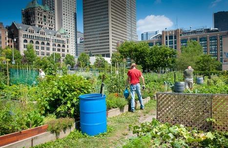 Les jardins communautaires, oasis urbaines / Montréal | Économie circulaire locale et résiliente pour nourrir la ville | Scoop.it
