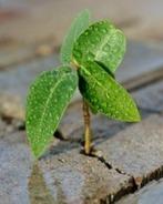 #RRHH #Desarrollo #Competencias: Ocho maneras de desarrollar la #resiliencia   Empresa 3.0   Scoop.it