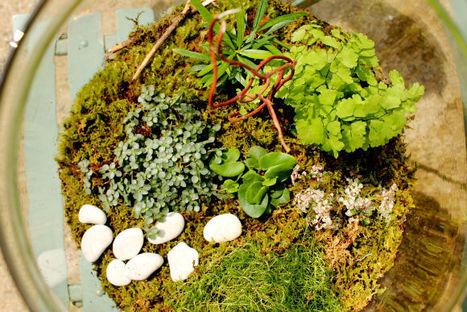 DIY Terrariums with Terrain | Flores y plantas | Scoop.it