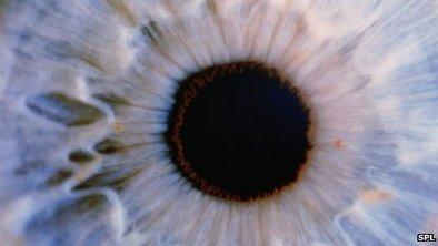 Pequeños destellos de luz en el vientre estimulan la salud visual | PRODUCTOS NATURALES | Scoop.it