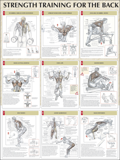 Strength Training For The Back | naturalbodybuilding | Scoop.it