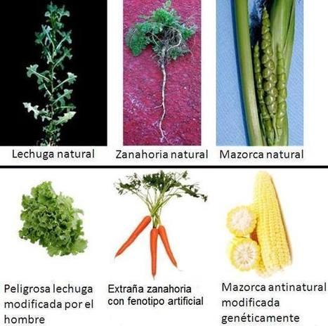 De verdad crees que tu comida es natural? | Pseudociencias, bulos y mitos | Scoop.it