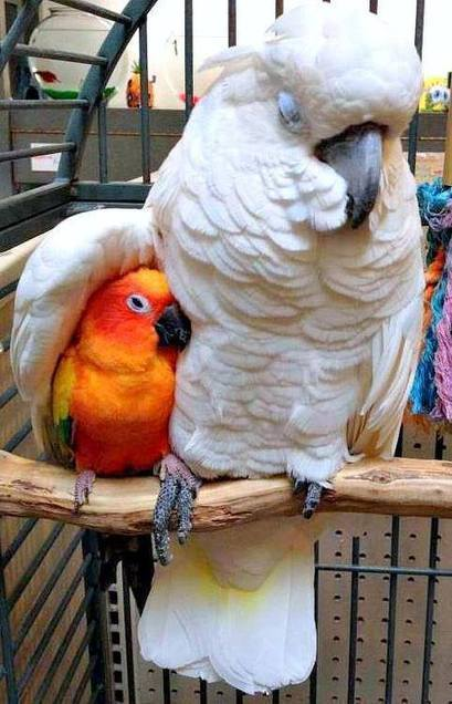 Two parrots | Facts Village | Funny Pics Online | Scoop.it