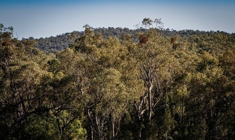 East Australia one of 11 areas to account for 80% of world forest loss by 2030 | this curious life | Scoop.it