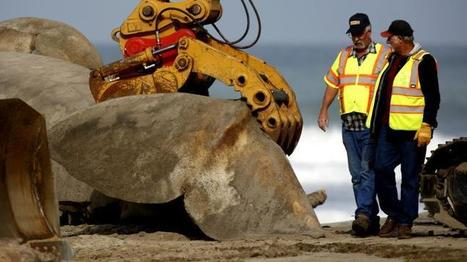 Dead whale (pieces) hauled away from San Onofre State Beach | Coastal Restoration | Scoop.it
