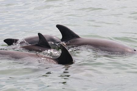 Ukrainian 'Killer' Dolphins Escape Training Base, One is Armed | Tenerife | Scoop.it