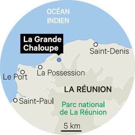 A La Réunion, la forêt des origines renaît devant l'océan avec l'aide de bénévoles | Ile de la réunion : les clés du développement | Scoop.it