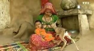 Video: Mujer da de mamar a su hijo y a una cría de antílope huérfano en la India | Gender Inequalities & Development | Scoop.it