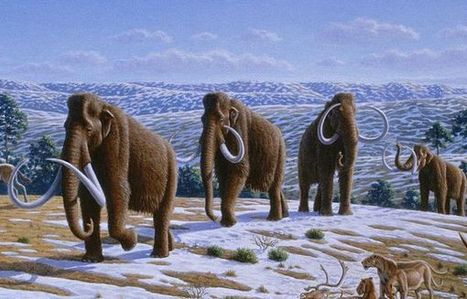 11-Year-Old Boy Discovers 30,000-Year-Old Woolly Mammoth Carcass - Animal News: Animal Planet | Comprar la más caliente de s Nike Run para ningún cargo adicional Various en Punchfrees | Scoop.it