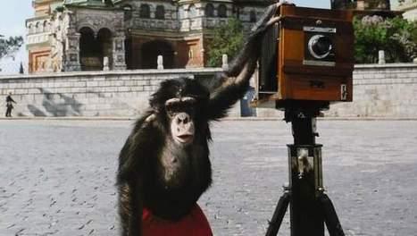 Kijk eens naar het aapje: foto's door chimpansee brengen 59.000 euro op | MaCuSa Sam | Scoop.it