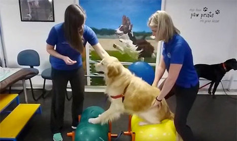 Physical Therapy Helps Paralyzed Dog Recover | Modern dog training methods and dog behavior | Scoop.it