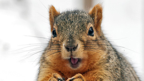 What A Dead Squirrel Taught Me About Value Pricing | The CEO's Guide to Growth | Scoop.it