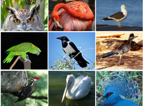 Living bird species mapped (ScienceAlert) | Science and Other Wild Affairs | Scoop.it