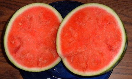 Pollenizer research should help seedless watermelon farmers | Research from the NC Agricultural Research Service | Scoop.it