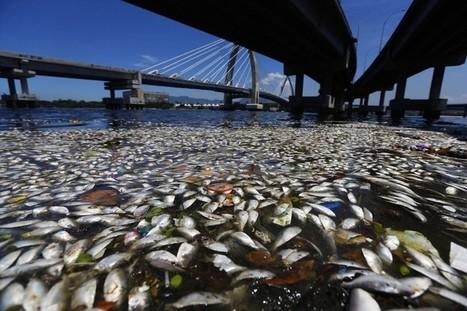 Hécatombe de poissons dans la baie de Rio à l'approche des JO 2016 | Le flux d'Infogreen.lu | Scoop.it