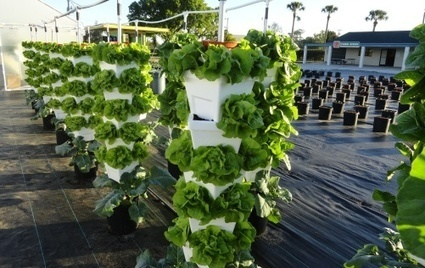 Fellsmere Farmers Market and Mercado featuring hydroponic ... | Vertical Farm - Food Factory | Scoop.it