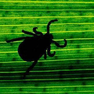 New Lyme Disease Bacteria Found in Midwest | Sustain Our Earth | Scoop.it