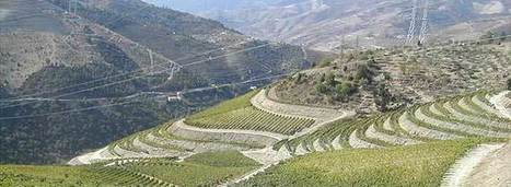 2013 Not A Vintage Year For Port   Vitabella Wine Daily Gossip   Scoop.it