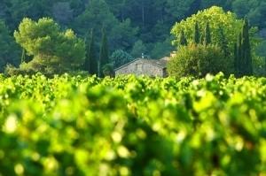 Une route officielle des vins de Provence   Oenotourisme   Scoop.it