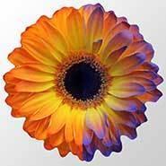 Samedi-sciences (84) : pour butiner, les bourdons captent les signaux électriques des fleurs - Le Club de Mediapart | Abeilles, intoxications et informations | Scoop.it