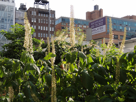 High Line (Piet Oudolf) - Manhattan NY {juli 2012} | Tuinen | Scoop.it
