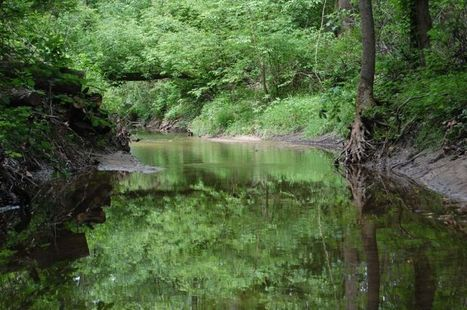 Preliminary plan for Windmill Branch Watershed released - The Star Democrat | Drainage Channel | Scoop.it