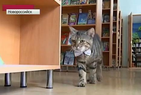 Kuzya, le chat russe promu assistant bibliothécaire - Glamour   Le métier de bibliothécaire   Scoop.it