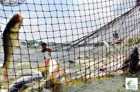 Beautiful Bangladesh on Twitter | Aquaculture Directory | Scoop.it