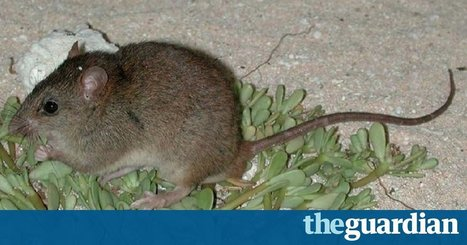 'Devastated': scientists too late to captive breed mammal lost to climate change | Farming, Forests, Water, Fishing and Environment | Scoop.it