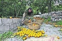 UPA denuncia discriminación del Ministerio a los productores de frutas y hortalizas | Sector hortofrutícola | Scoop.it